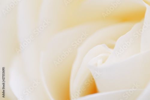 canvas print picture Rose