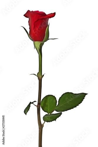 rote rosen stream online with english subtitles 4320p 21 9 bestmfiles. Black Bedroom Furniture Sets. Home Design Ideas