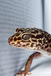 Gecko with book