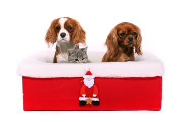 zwei Hunde und Katze im Weihnachtskarton
