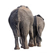 two elephants walking away isolated