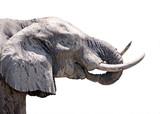 elephant eating close up