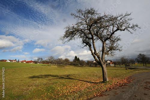 apfelbaum im herbst von marina gaubies lizenzfreies foto 27570423 auf. Black Bedroom Furniture Sets. Home Design Ideas