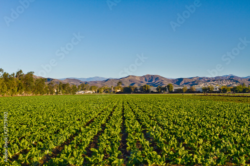 California Crop Fields