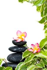 Cadre zen avec fleurs de frangipanier