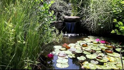 bassin aquatique de jardin