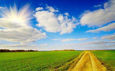 Rural landscape in sunny autumn day.