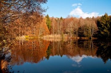 Herbst am Gräfinweiher