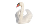 Swan on white.