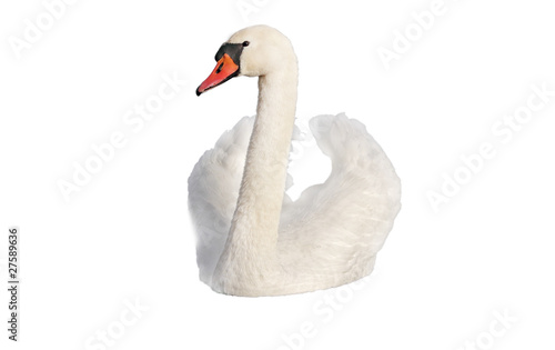 Foto op Plexiglas Zwaan Swan on white.