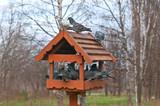 Overcrowded bird feeder poster