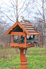 Bird Feeder and Pigeons