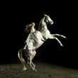 Fototapeten,pferd,schönheit,mädchen,portrait