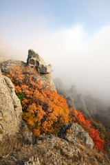 Bright orange bush in rocks, mountains.Crimea.Fog.
