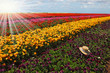 The multi-color flower field