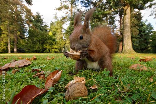In de dag Ezel Eichhörnchen