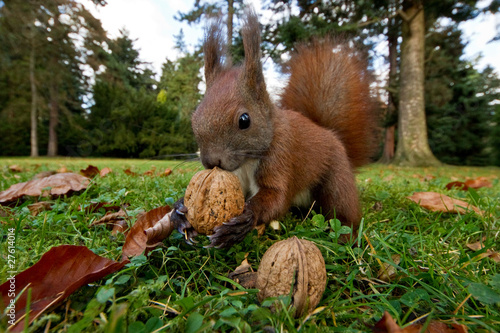 Foto op Canvas Ezel Eichhörnchen