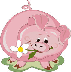 Piggy with white flower.