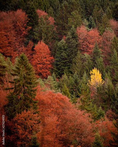 Bunter Wald im Herbst
