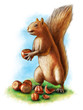 Hazelnuts and squirrel