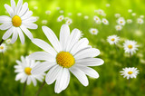 Blumen 196
