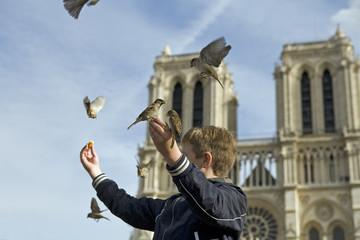 Moineaux parisien à notre dame