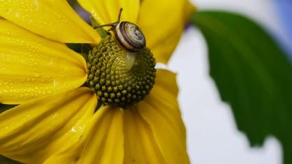 Snail Climbing up Blossom