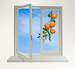 Tangerines in window