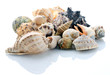 conch shells - 27657885