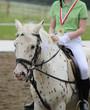 Pferd (Apfelschimmel) und Reiterin beim Reitturnier