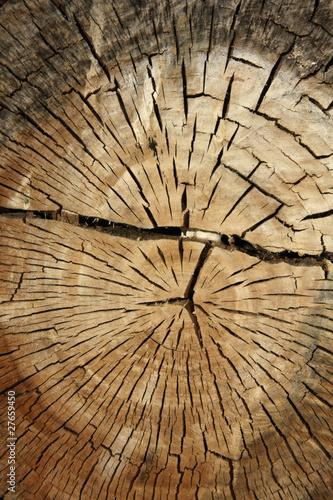 Coupe de tronc d 39 arbre de tsach photo libre de droits 27659450 sur - Tronc d arbre coupe ...