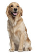 Golden Retriever, 1 and a half years old, sitting - 27671489