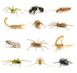 insect collection
