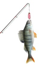 perch on fishing-rod