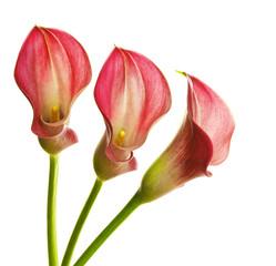 pink callas