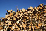 Stacked Wood Logs for Renewable Energy poster