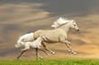 ponies running in sunset