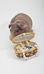 Морская свинка спряталась за коробочку с бусами
