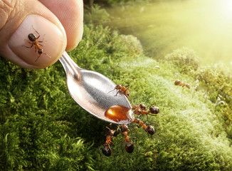 human feeding ants with syrup