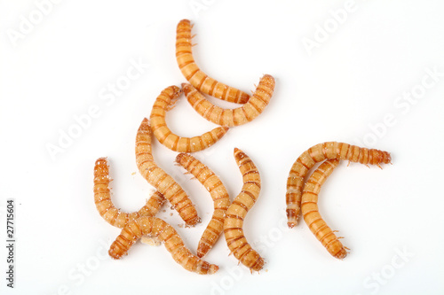 Leinwanddruck Bild Mehlwürmer von oben gesehen