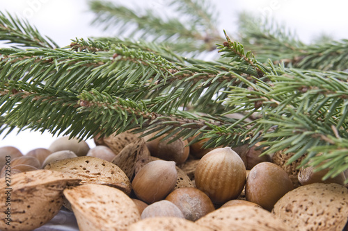 hazelnuts and almond nuts Isolated with branches of spruce