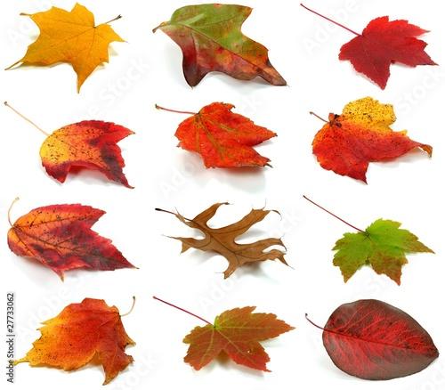 Herbstblätter Set 1