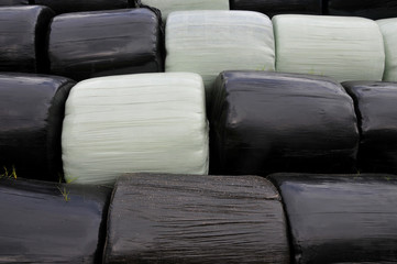 Silage bales wrapped in plastic