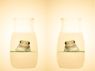 frog in the bottle