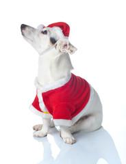 Un cane per Natale