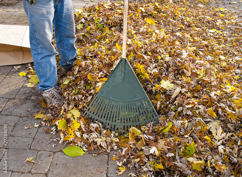 Garden Rake and heap of leaves