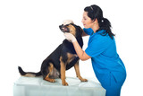 Doctor veterinary examine teeth dog
