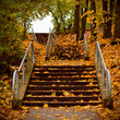 stairs covered with maple leaves