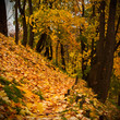 Pathway on an autumn hillside, covered with leaves