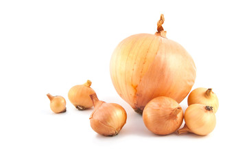 golden ripe onions on a white background